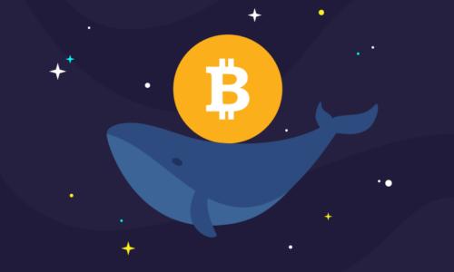 Balinalar Harekete Geçti! 319 Milyon Dolar Değerinde İşlem Yapıldı