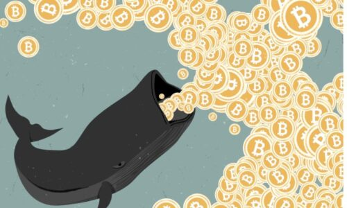 What is a Cryptocurrency Whale?
