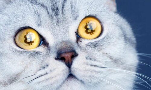 Bitcoin Cash Bitcoin Cat'e Hazırlanıyor